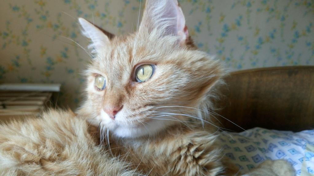 COMETE (chaton noir et blanc) Dsc_0912