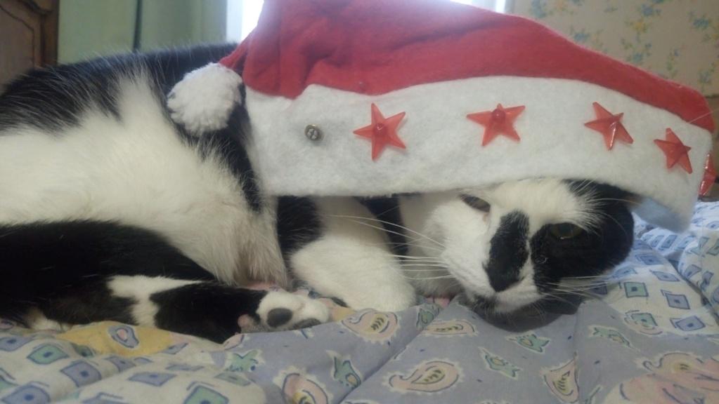 COMETE (chaton noir et blanc) Dsc_1011