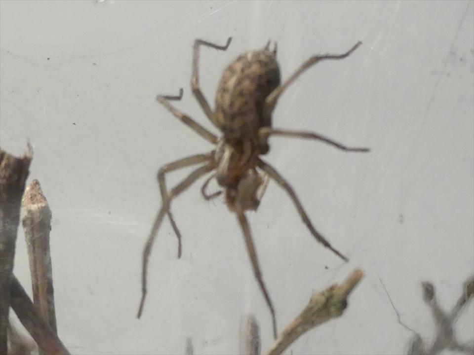 [help] Première araignée P1020810