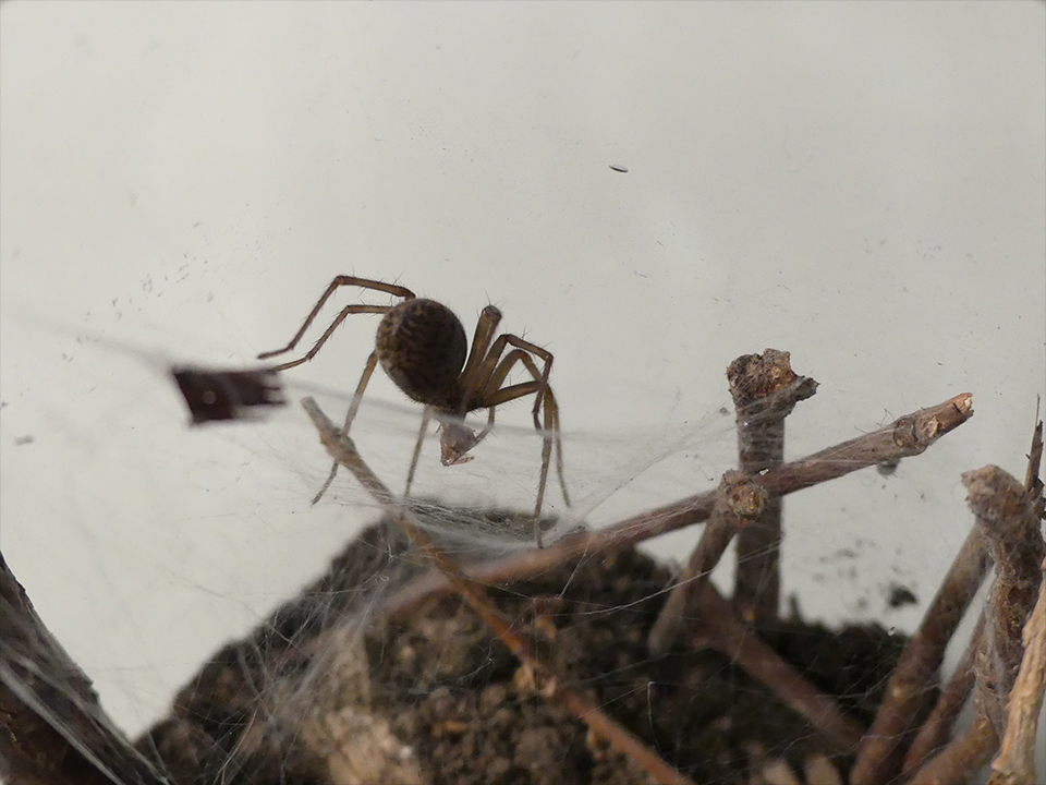 [help] Première araignée P1020812