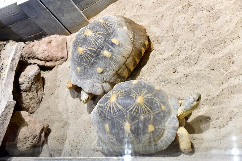 "Visite de ""Pairi daiza"" (Belgique). ""les tortue"" 002_du17"