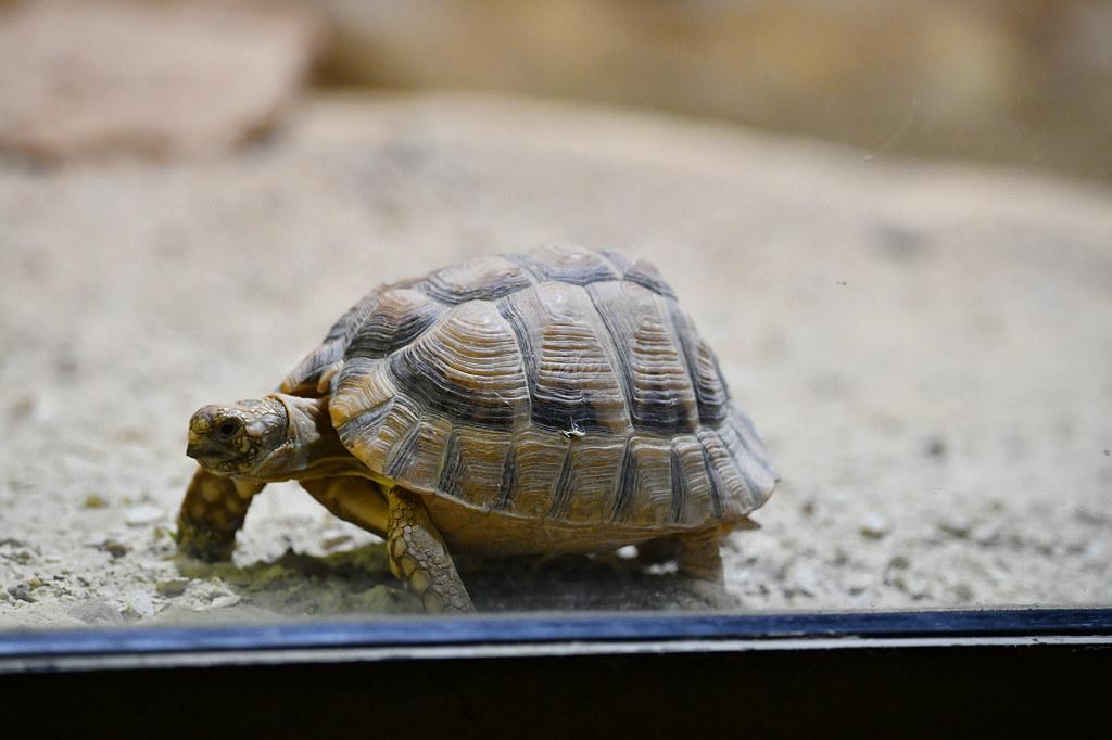 "Visite de ""Pairi daiza"" (Belgique). ""les tortue"" 007_du13"