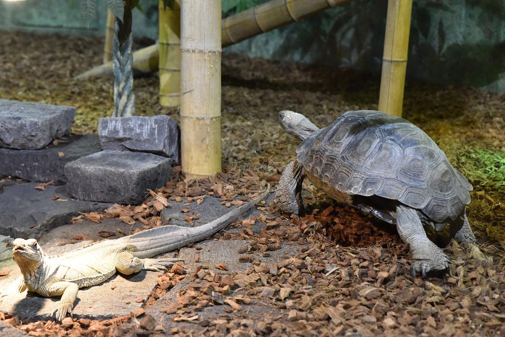 "Visite de ""Pairi daiza"" (Belgique). ""les tortue"" 013_du10"