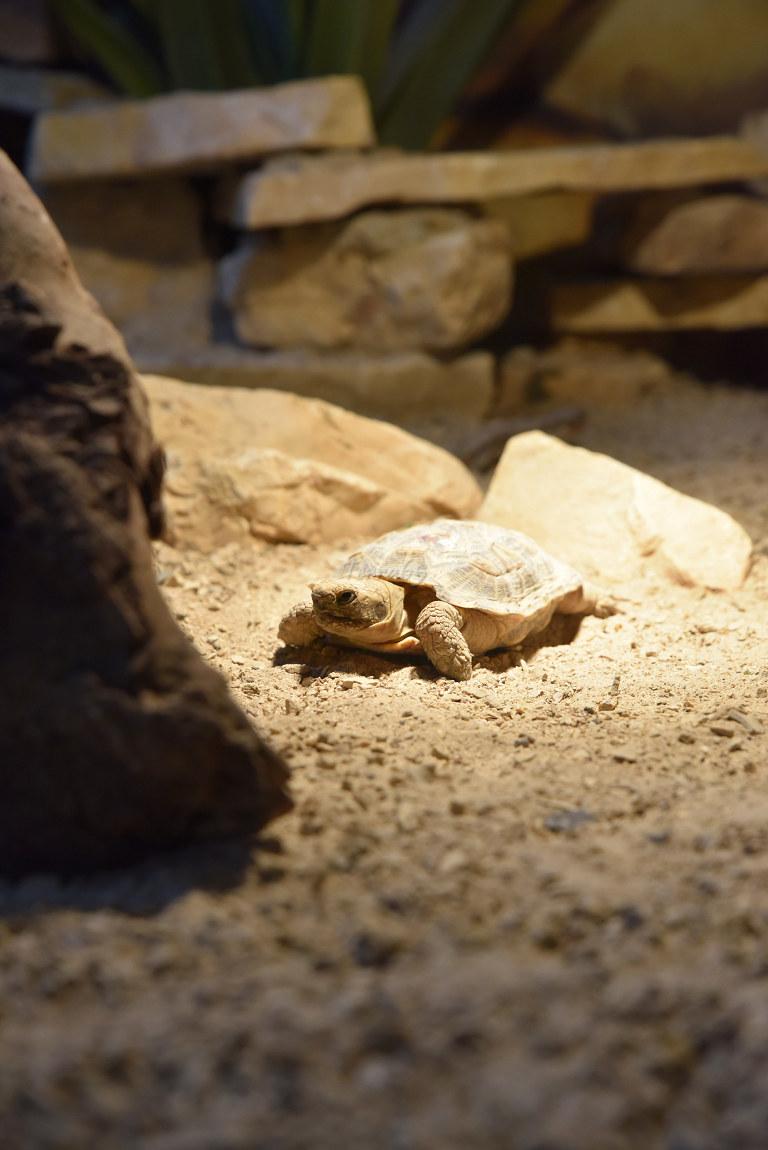 "Visite de ""Pairi daiza"" (Belgique). ""les tortue"" 017_du10"