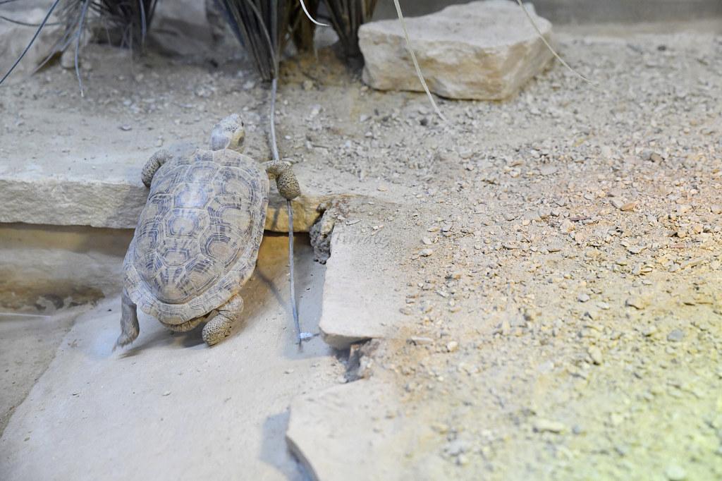 "Visite de ""Pairi daiza"" (Belgique). ""les tortue"" 028_du10"