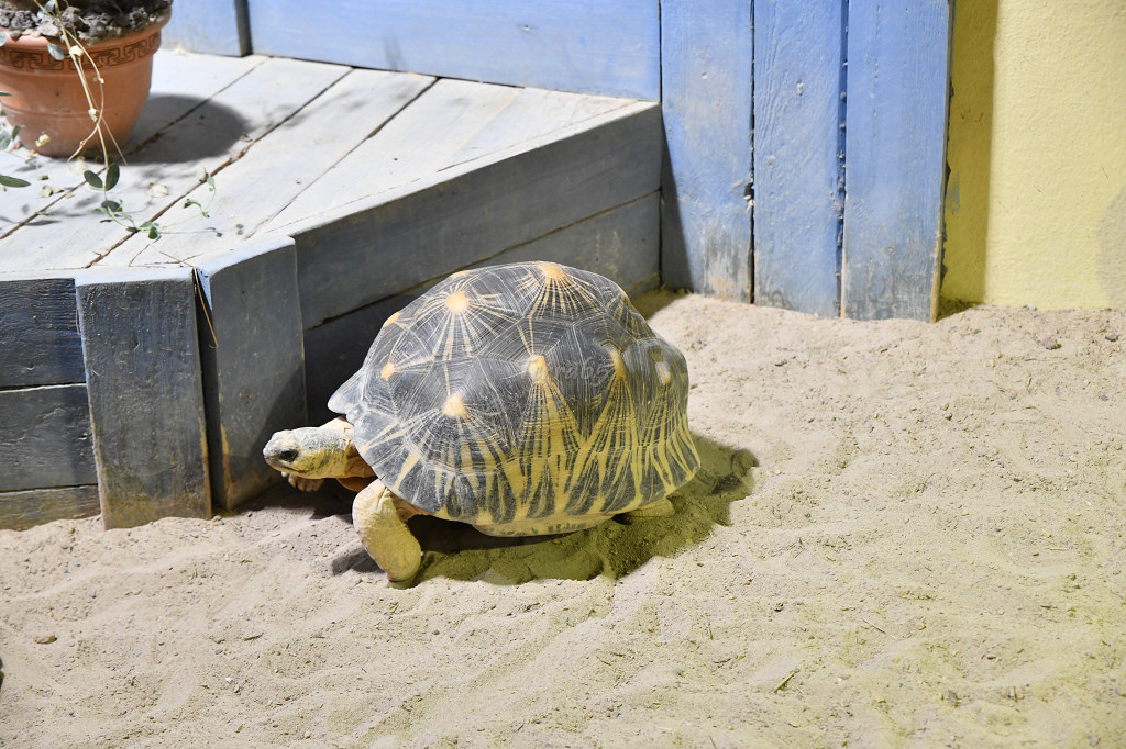"Visite de ""Pairi daiza"" (Belgique). ""les tortue"" 032_du10"