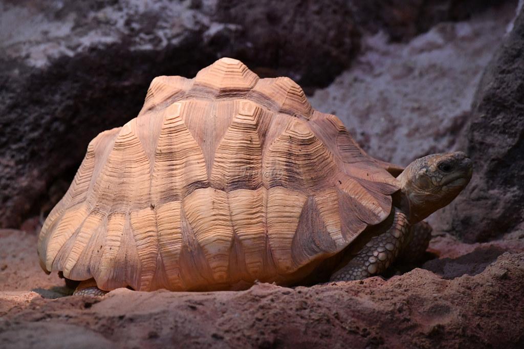 "Visite de ""Pairi daiza"" (Belgique). ""les tortue"" 033_du10"