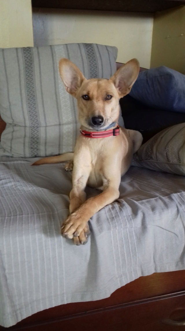 PIKA née le 01/10/2017 - F Adoptée dans le 26 49584110