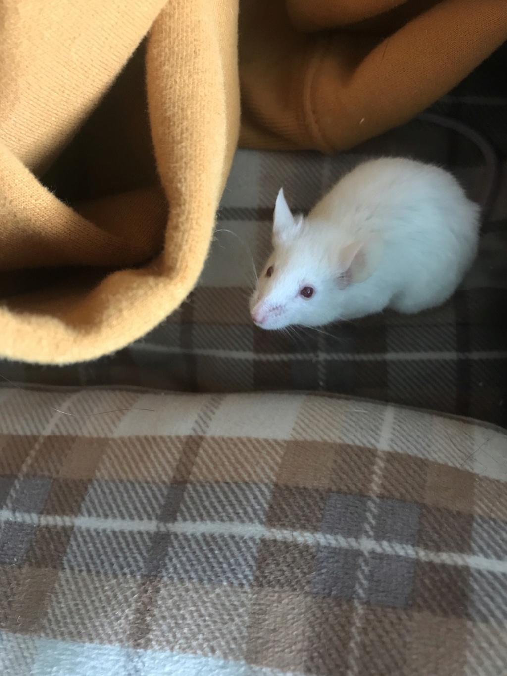 Help I found a mice 23947410