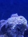Présence d'algues courte blanche comme de la mousse 20190215