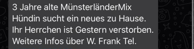 Münsterländer-Mix, Hündin Img-2023