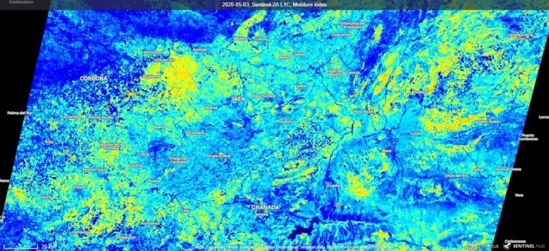 Seguimiento evolutivo/productividad parcela de secano en calar (Jaén) 2020-010