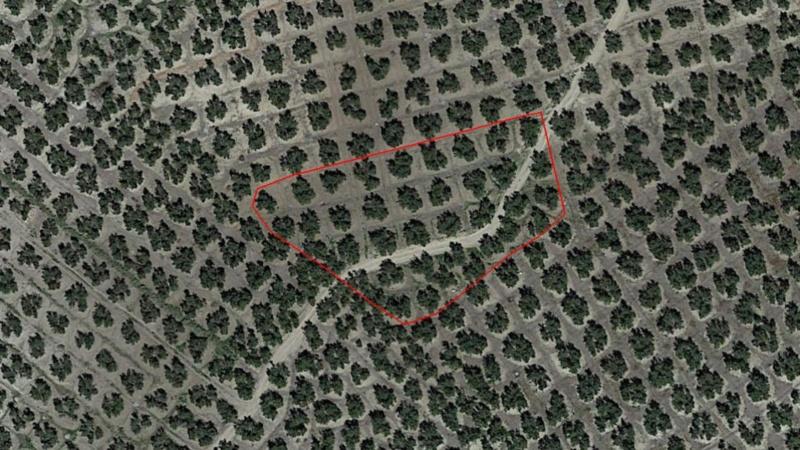 Seguimiento evolutivo finca de secano en Jaén. Google11