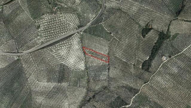 Seguimiento evolutivo finca de secano en Jaén. La_cue11
