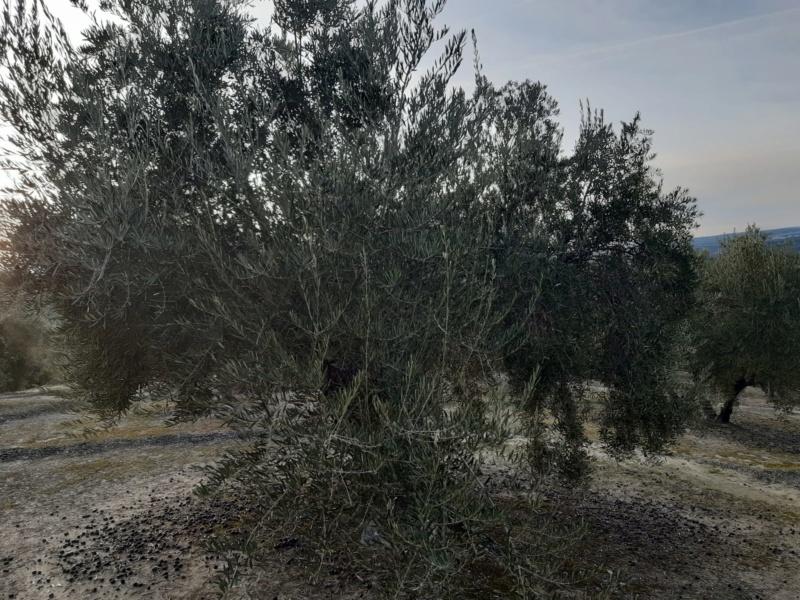 cosecha 2019-20 - Página 5 Photo-13
