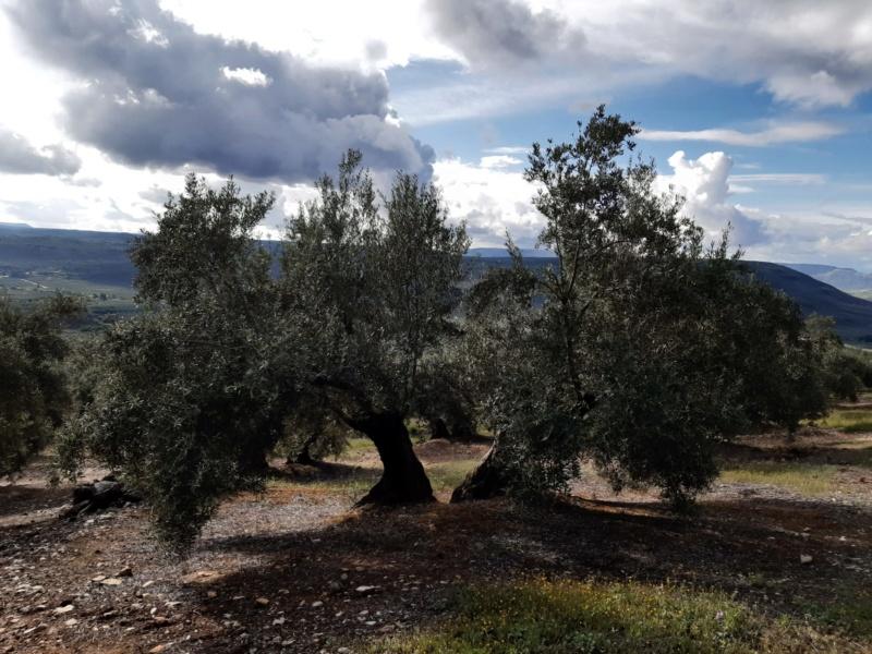 Seguimiento evolutivo/productividad parcela de secano en calar (Jaén) Photo-17