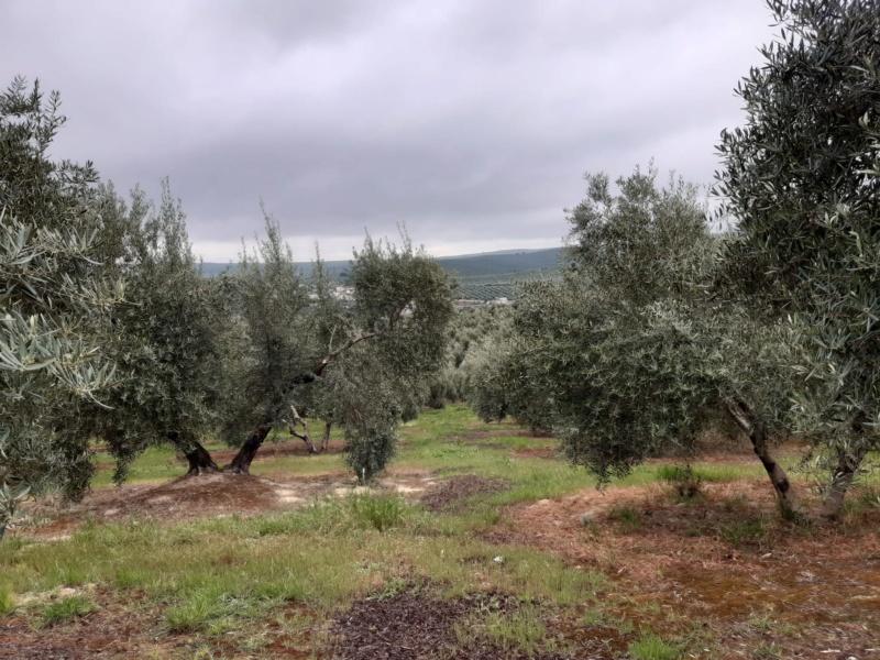 Seguimiento evolutivo/productividad parcela de secano en calar (Jaén) Photo-19