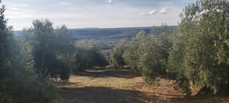 Seguimiento evolutivo/productividad parcela de secano en calar (Jaén) - Página 2 Photo-49