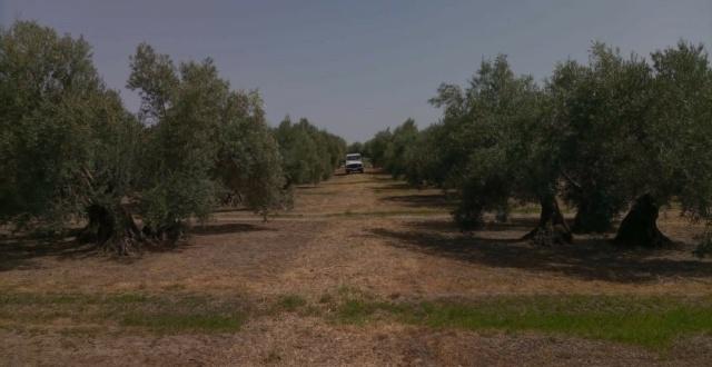 Seguimiento evolutivo finca de secano en Jaén - Página 3 Photo-50