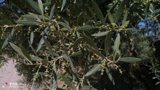 Seguimiento evolutivo finca de secano en Jaén - Página 3 Photo-51