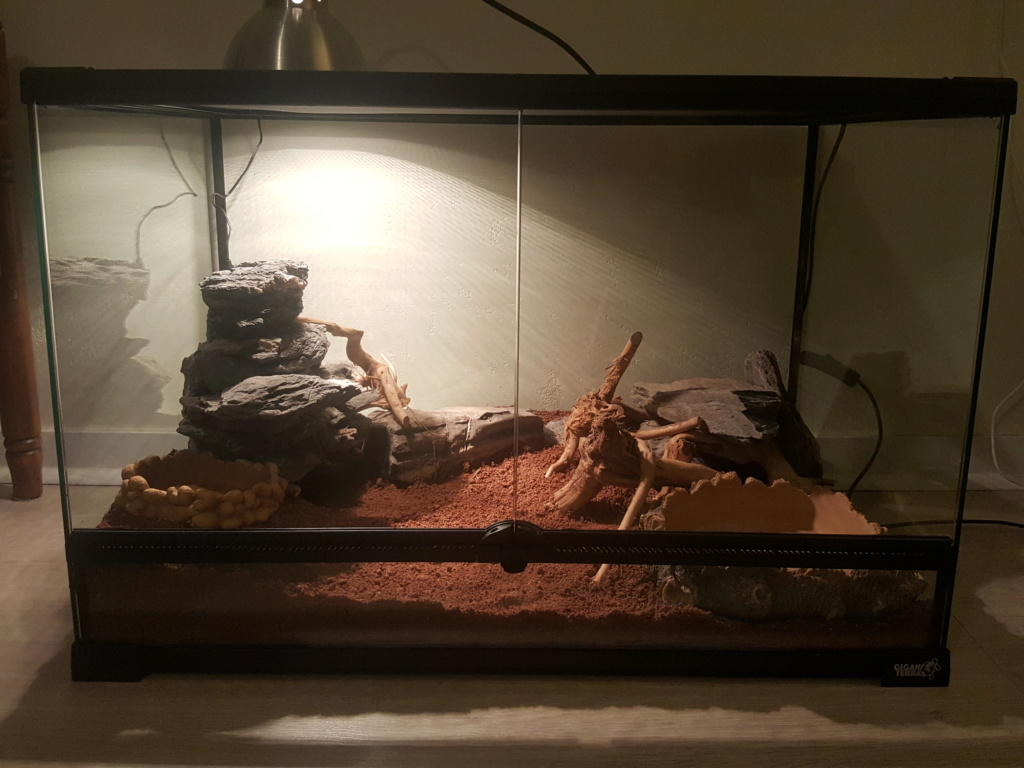 Conseils installation terrarium pour gecko leopard 110