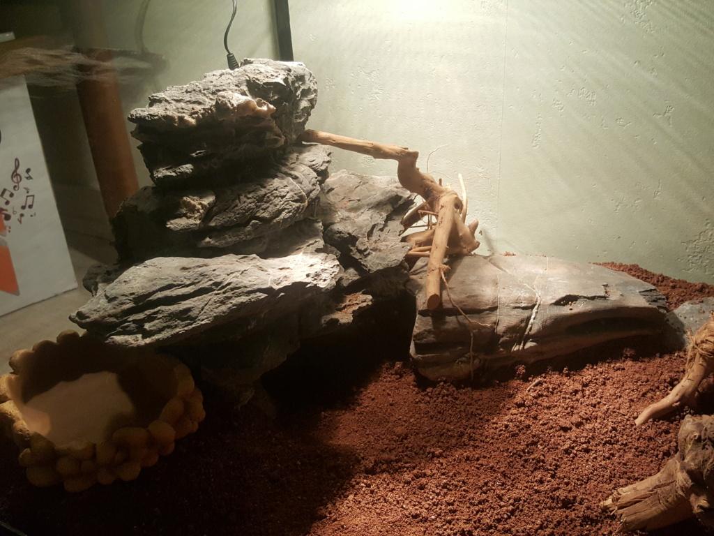 Conseils installation terrarium pour gecko leopard 210