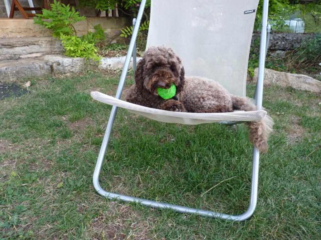 Jouer avec son chien: est-ce dramatique? 00314