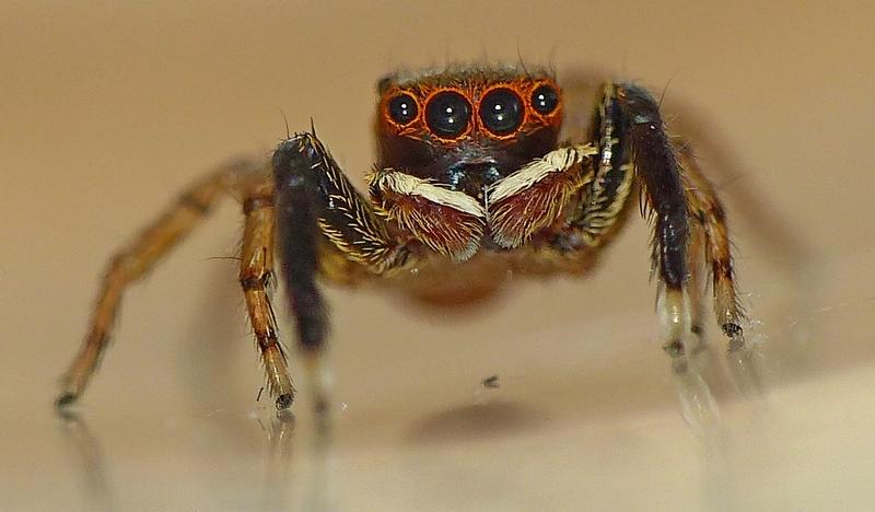 Pour celles & ceux qui n'aiment pas les araignées ! 09_06_12