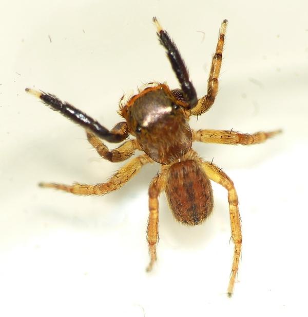 Pour celles & ceux qui n'aiment pas les araignées ! 09_06_13