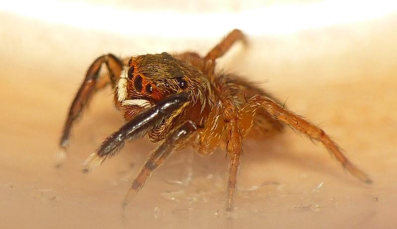 Pour celles & ceux qui n'aiment pas les araignées ! 09_06_16