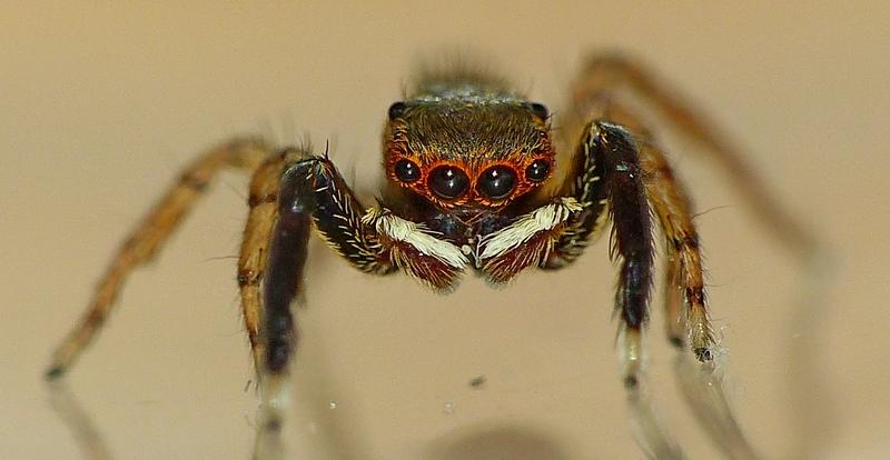 Pour celles & ceux qui n'aiment pas les araignées ! 09_06_17
