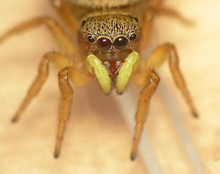 Pour celles & ceux qui n'aiment pas les araignées ! 10_06_12