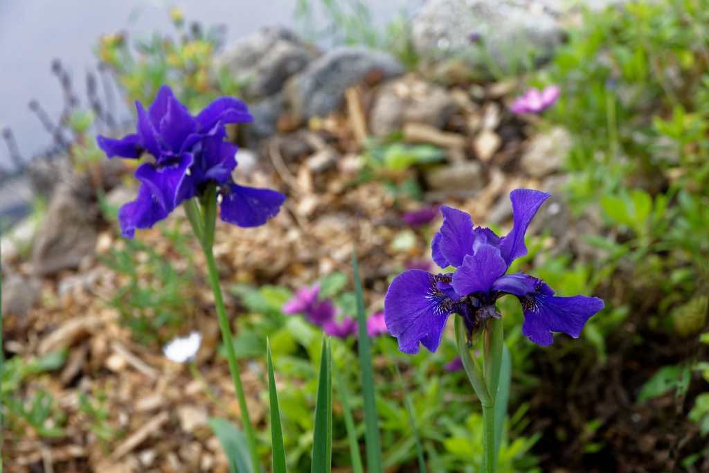 jardin du Ragot Quiberon ! Dsc_3311
