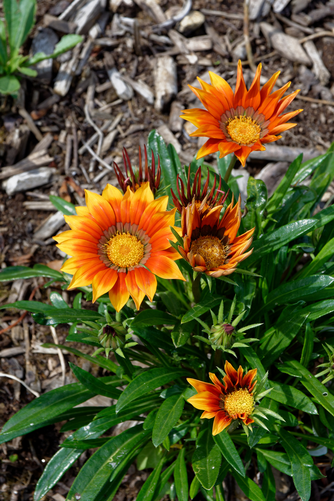 jardin du Ragot Quiberon ! Dsc_3312
