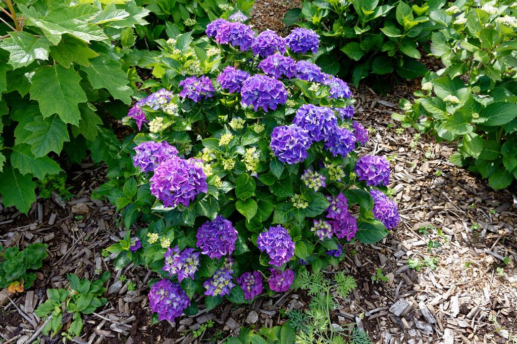 jardin du Ragot Quiberon ! Dsc_3315
