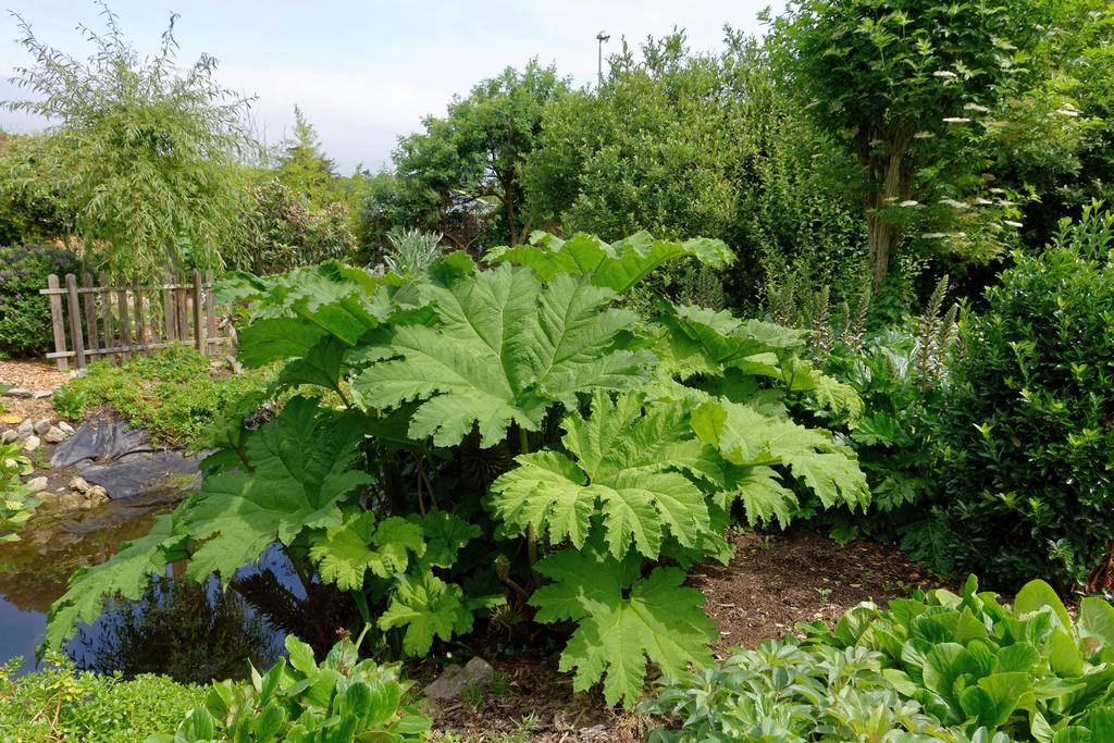 jardin du Ragot Quiberon ! Dsc_3320