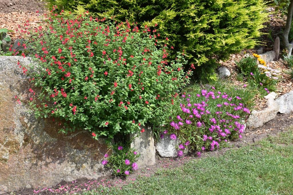 jardin du Ragot Quiberon ! Dsc_3321