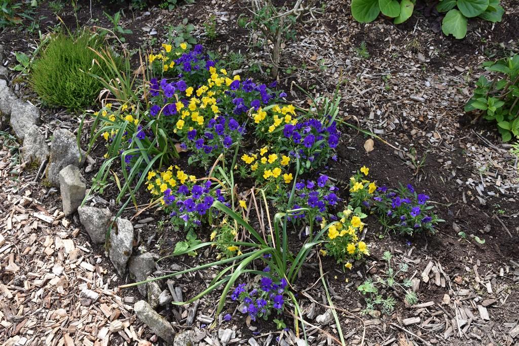 jardin du Ragot Quiberon ! Dsc_3322