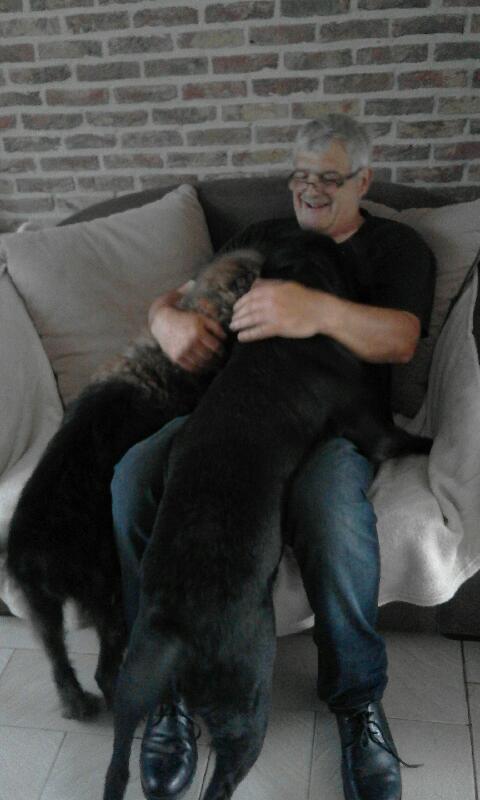 Owen, X labrador d'environ 3 ans  20180510