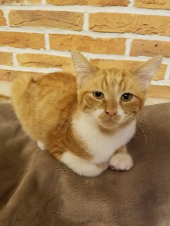 oumtiti chaton né en avril 2018 20180915
