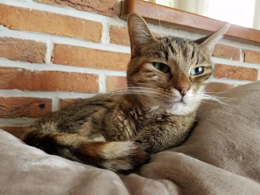 jagna, jolie tigrée née le 10 avril 2014 20180927