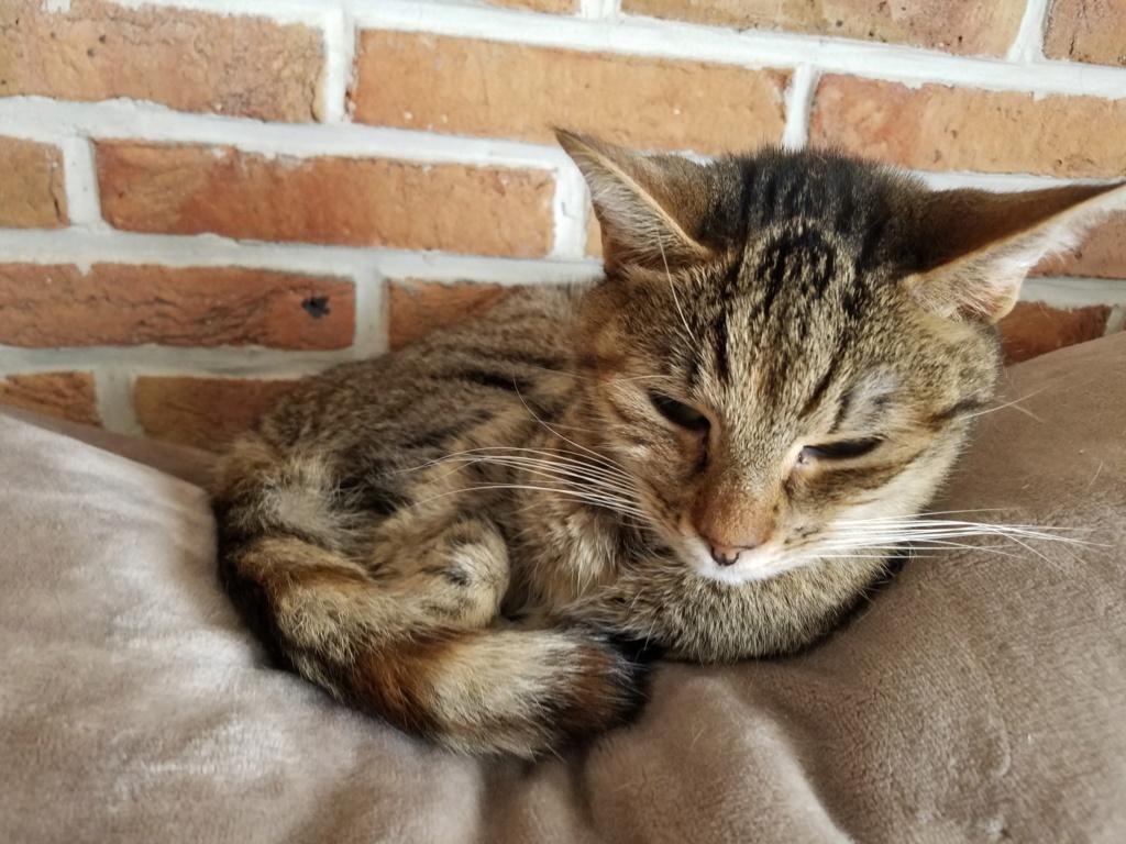 jagna, jolie tigrée née le 10 avril 2014 20180928