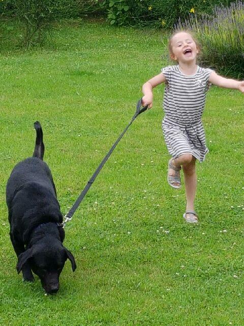 Owen, X labrador d'environ 3 ans  Resize10