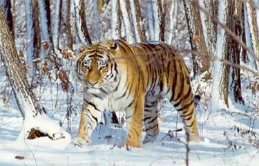 Interview de Tiyourin, qui peut traduire? Tigre210