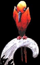 L'encyclopédie anarchique des créatures de Troy Zyflor10