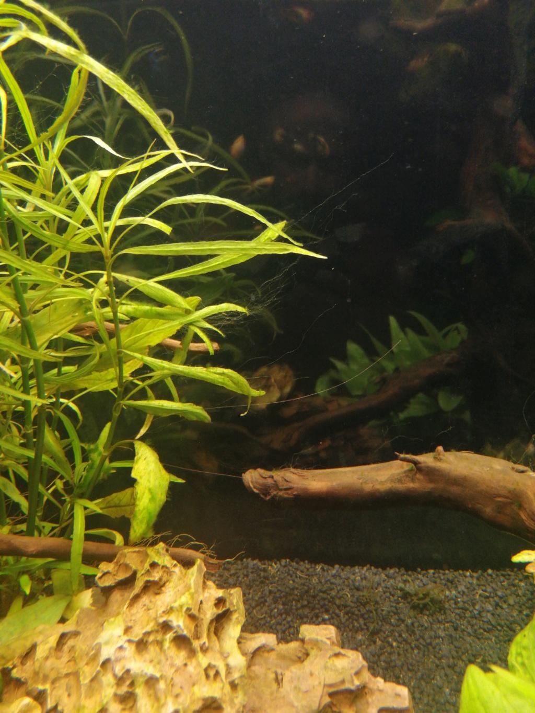 Les algues sont de retour  16064912