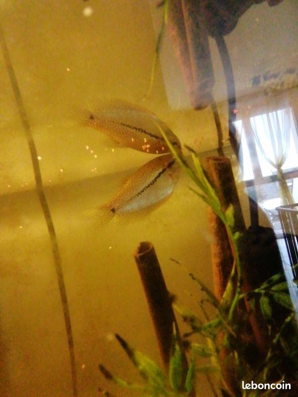 reconnaissance poisson Poisso11