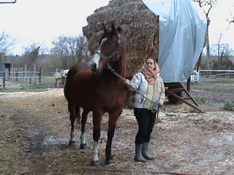 KARNET - Cheval de selle polonais né en 1993 - adopté en décembre 2009 par Sophie Gniada13