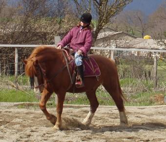 PAPILLON poney 1m46 - annonce désactivée à la demande de sa propriétaire Papill10