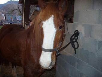 PAPILLON poney 1m46 - annonce désactivée à la demande de sa propriétaire Papill13